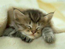 Sabia que os gatos só sabem dormir?