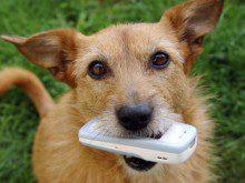 Já falou com o seu cão ao telefone?
