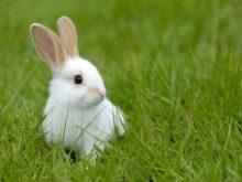 Conhece bem os coelhos?