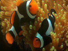 Sabe o que os peixes vêm?