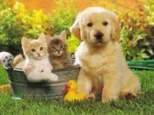 Tem animais de estimação?