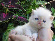 Dá carinhos ao seu gato?