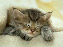 Porque os gatos dormem tanto?