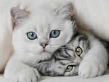 Os gatos são sempre só carinhosos?