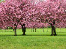 O papel das árvores