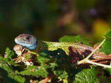 Conhece todos os tipos de lagartos?