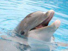 Gosta de golfinhos?
