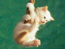 Conhece os músculos dos gatos?