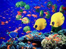 Sabe tudo sobre peixes?