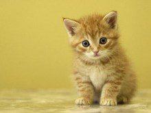 Tem gatos em casa?