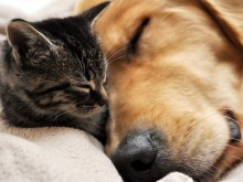 animais a dormir